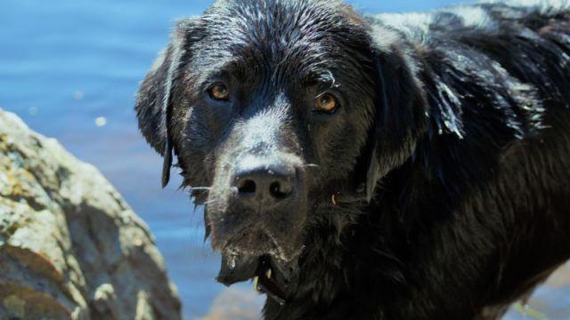 Urlaub mit dem Hund - Kurzurlaub Hochschwarzwald