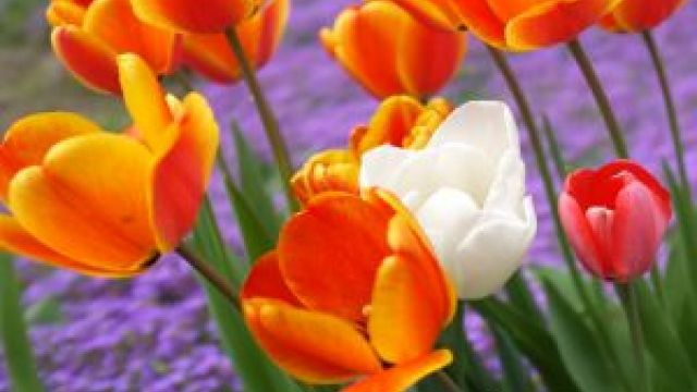 Frühling in Bullay - Kurzurlaub Mittelmosel