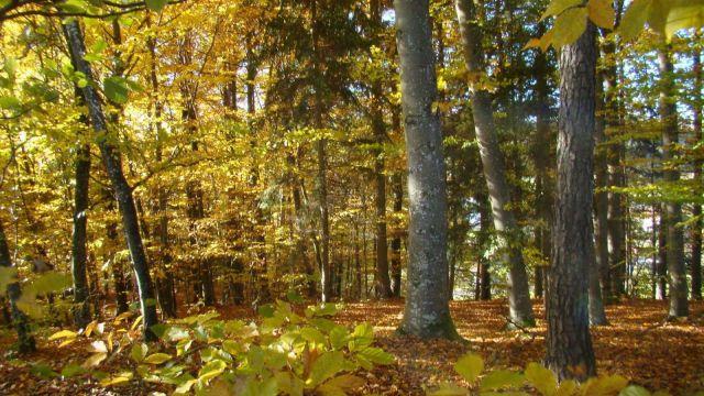 Aktiv-Erlebniswoche - Kurzurlaub Bayerischer Wald