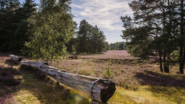Sauna trifft Gourmet - Kurzurlaub Heidekreis