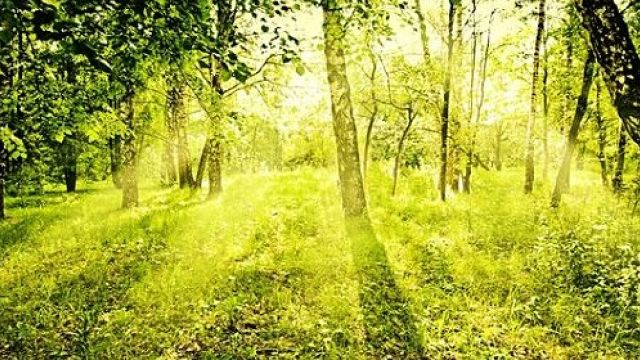 Selfness und Wellness  - Kurzurlaub Nordschwarzwald