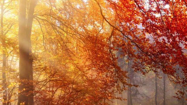 Herbstzauber am Rennsteig - Kurzurlaub Rennsteig