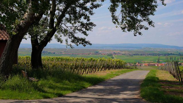 Urlaubsregion Rheinhessen
